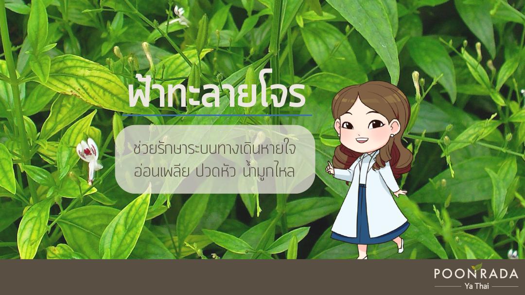 ไซนัสอักเสบกับการรักษาแผนไทย-3