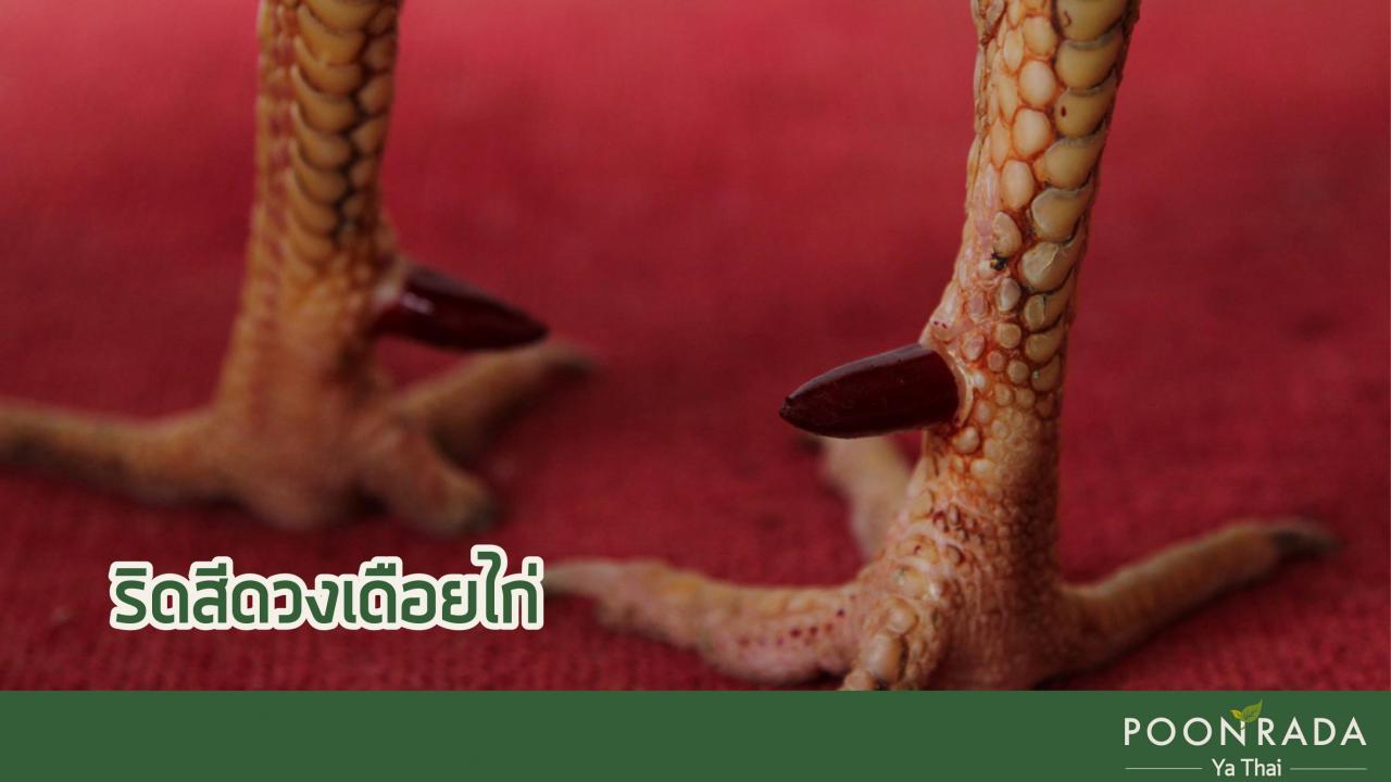 ริดสีดวง_5_ประเภท_ตำราแพทย์แผนไทย-3