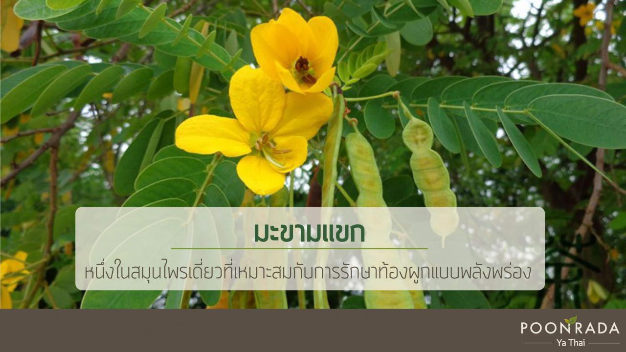 สมุนไพรไทยรักษาท้องผูกแบบพร่อง-3