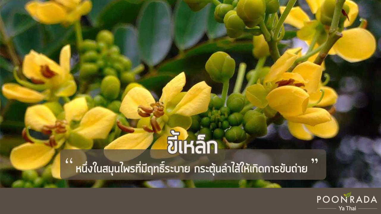 สมุนไพรไทยรักษาท้องผูกแบบแกร่ง-3