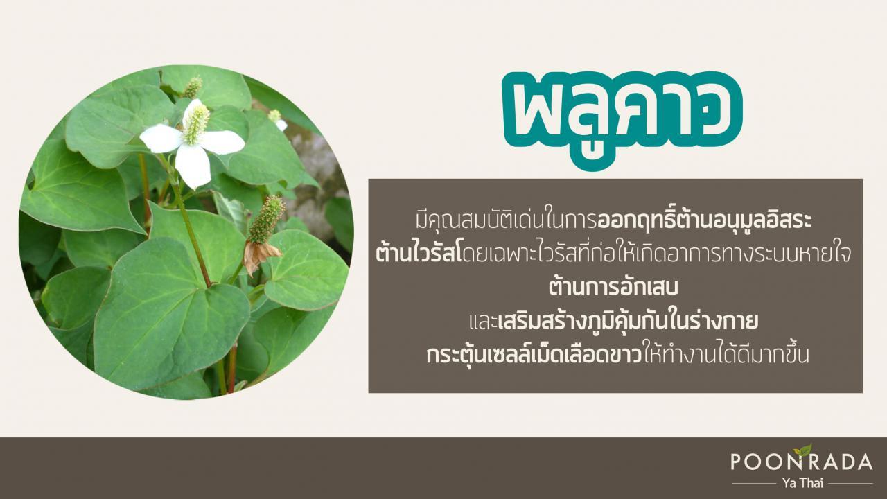 สมุนไพรไทย ต้านcovid19
